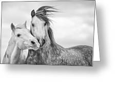 Best Friends I Greeting Card by Tim Booth
