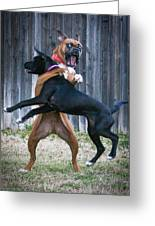 Best Of Friends Greeting Card by Jeff Mize
