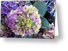 Beter Bloom Late Then Never Greeting Card