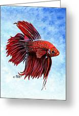 Betta-big Red Greeting Card