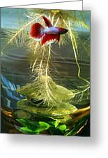 Betta Fish Moby Dick Greeting Card