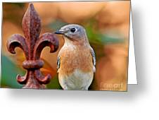 Fleur De Lis And Bluebird Greeting Card