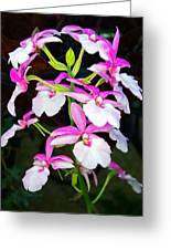 'betty' Orchid Greeting Card