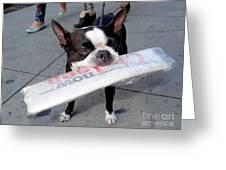 Betty The News Dog Greeting Card