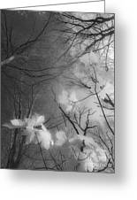 Between Black And White-02 Greeting Card