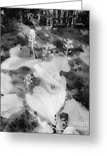Between Black And White-12 Greeting Card