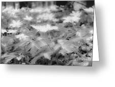 Between Black And White-14 Greeting Card