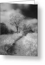 Between Black And White-23 Greeting Card
