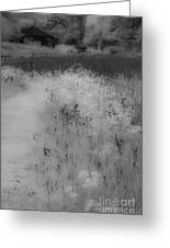 Between Black And White-28 Greeting Card
