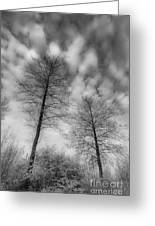 Between Black And White-30 Greeting Card