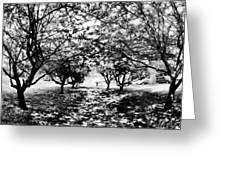 Between Trees II Greeting Card