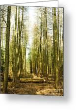 Betweenthe Trees Greeting Card