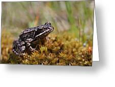 Beutiful Frog On The Moss Greeting Card
