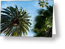 Beverly Palms Greeting Card