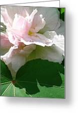 China Rose 2 Greeting Card