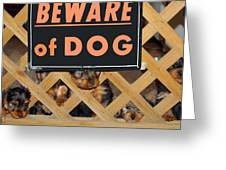 Beware Of Dog Greeting Card by John Dauer