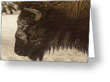 Beware Of The Bison Greeting Card