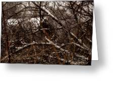 Beyond The Thicket - Abandoned Greeting Card