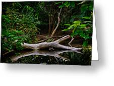 Bidwell Park Scene Greeting Card