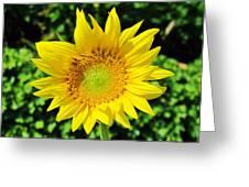 Big And Beautiful Greeting Card