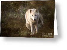 Big Bad Wolf Sprinkling The Grass Greeting Card