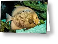 Big Beautiful Fish Greeting Card