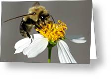 Big Bee Greeting Card