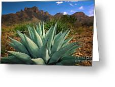 Big Bend Century Plant Greeting Card