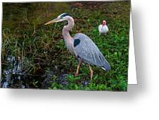 Big Blue And The Ibis Greeting Card