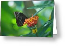 Big Boy Butterfly Greeting Card