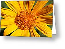 Big Bright Bold Greeting Card