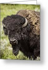 Big Bruiser Bison Greeting Card