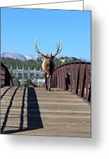Big Bull On The Bridge Greeting Card