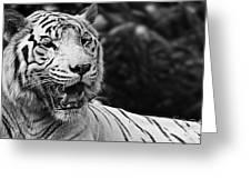 Big Cats 3 Greeting Card