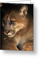 Big Cats In Ohio. No.20 Greeting Card