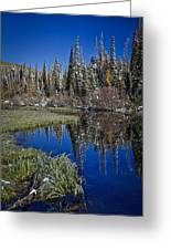 Big Cottonwood Canyon  Greeting Card