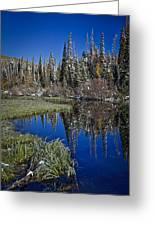 Big Cottonwood Canyon  Greeting Card by Richard Cheski