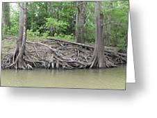 Big Cypress River Trees Greeting Card