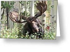 Big Daddy The Moose 3 Greeting Card