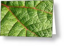 Big Green Leaf 5d22460 Greeting Card