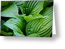 Tropical Green Leaves Greeting Card