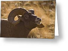 Big Horn Ram   #4856 Greeting Card