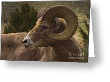 Big Horn Ram   #5098 Greeting Card