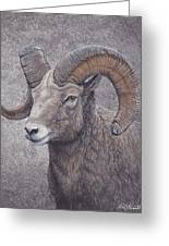 Big Horn Ram Greeting Card