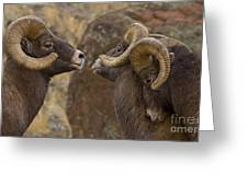 Big Horn Rams   #4989 - Signed Greeting Card