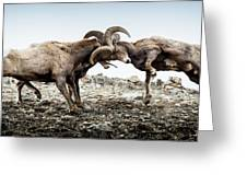 Big Horn Sheep Butting Heads Greeting Card