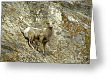 Big Horn Sheep On Mountain Greeting Card