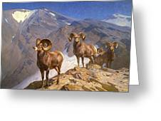 Big Horn Sheep On Wilcox Pass Greeting Card