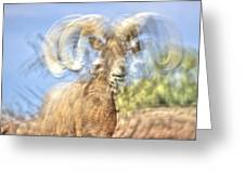 Big Horned Sheep 3 Greeting Card