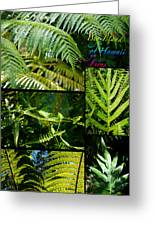 Big Island Of Hawaii Ferns 2 Greeting Card by Colleen Cannon